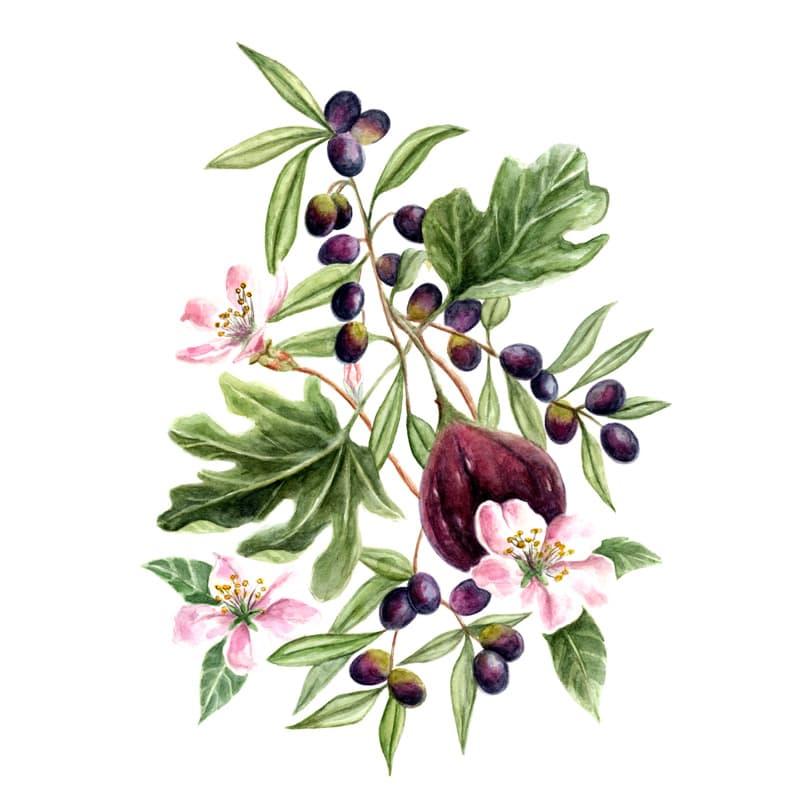 Acquerello Originale con Fichi e Olive