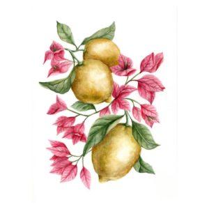 Original Watercolor - Lemons and Bouganville