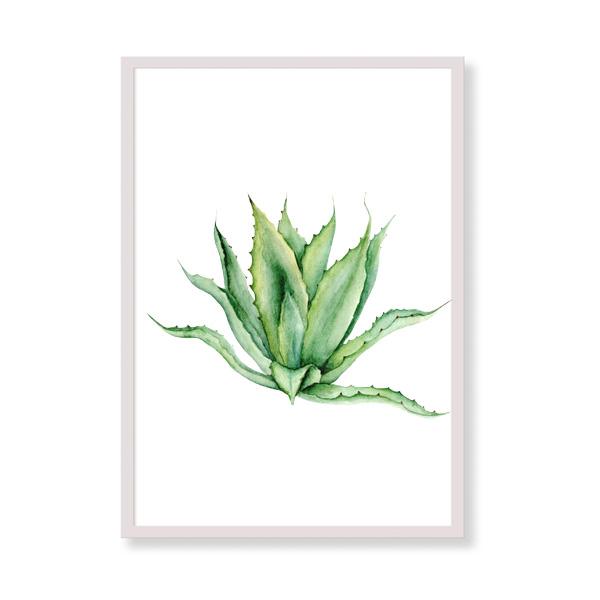 Stampa artistica - Agave - Quadri con piante tropicali