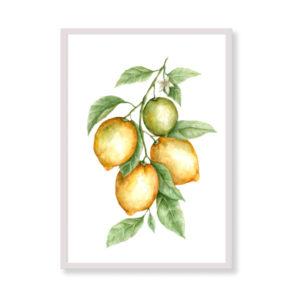 Art Print - Amalfi Coast Lemons