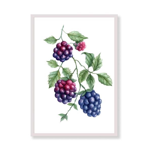 Art Print - Blackberries - Ideas for kitchen wall decor