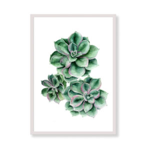 Art Print - Succulent - Tropical Wall Decor Art