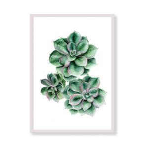Stampa artistica - Succulente - Stampe tropicali