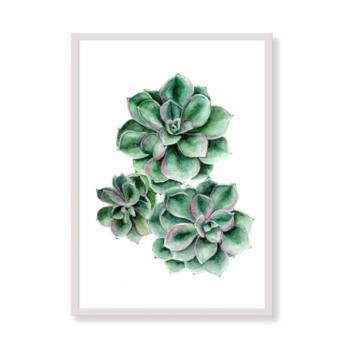 Art Print – Succulent