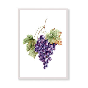 Art Print - Red Grape